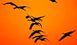 """Книжкова виставка: """"Чорне відлуння…"""", присвячена Дню Чорнобильської трагедії – 26 квітня"""